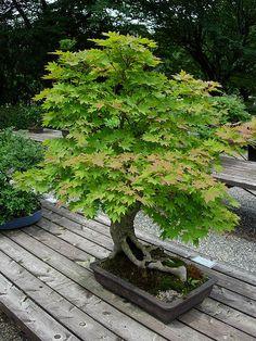 cool bonsai by w00kie, via Flickr