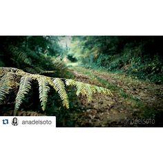 Qué bonitos paisajes nos deja el #otoño en #Galicia, ideales para disfrutar de una escapada #rural. En la web de #SienteGalicia puedes reservar la tuya!!!