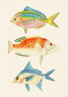Sealife Poster print Vintage soft color  fishes  by seasideprints, $12.00