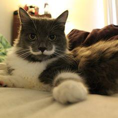 Gatti star del web: Hamilton, il micio con i baffi a manubrio