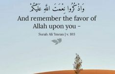 Islam, Quran Quotes, Knowledge, Faith, Life, Quotes From Quran, Loyalty, Believe, Religion