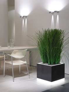 More Illumination For Your Interior By Green Design Indoor Plant Hire