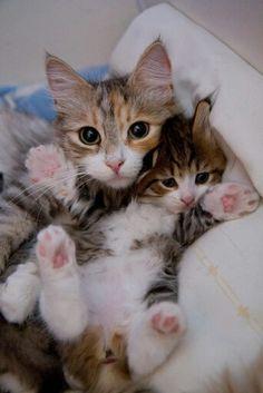 So so cute