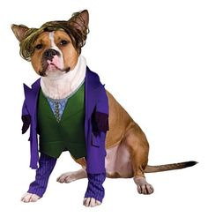 Batman The Dark Knight Joker Large Pet Costume - http://www.thepuppy.org/batman-the-dark-knight-joker-large-pet-costume/