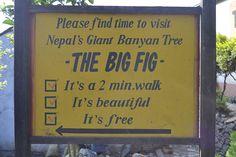 Big Fig, its beautiful and its free. Big Fig, Free, Beautiful
