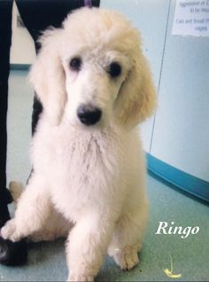 Ringo: Here's another photo of when I went to see my vet for the first time. I was very brave.