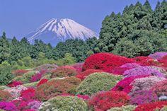 Azalea viewing in Hakone
