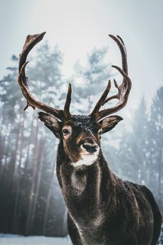 Forest Photography, Wildlife Photography, Animal Photography, Inspiring Photography, Nice Photography, Photography Lighting, Landscape Photography, Nature Animals, Animals And Pets