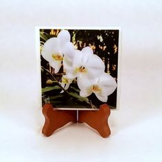 Handmade Photo Coaster Three White Flowers 0065C by PhotographyByRoger on Etsy