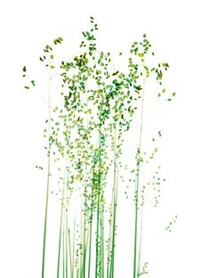 Photo : Grasses