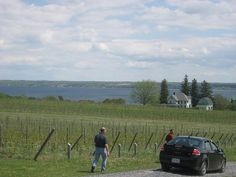 View from Fox Run Vineyards in the Finger Lakes by hvwinegoddess, via Flickr TasteCamp 2010