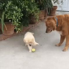 I do not need your ball, I'd better do other things