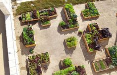 The Getty Salad Garden | an installation of organic heirloom vegetables and…