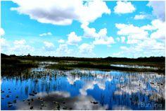BunTine: Everglades, Florida