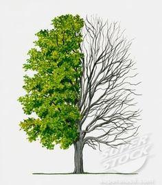 24 Ideas Sugar Maple Tree Tattoo For 2019 Maple Tree Tattoos, Pine Tree Tattoo, Tree Silhouette Tattoo, Tree Drawing Simple, Willow Tree Wedding, Tree Wallpaper Iphone, Palm Tree Sunset, Tree Canvas, Tree Illustration