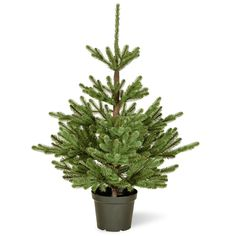 3ft Imperial Spruce Potted Feel Real Artificial Christmas Tree