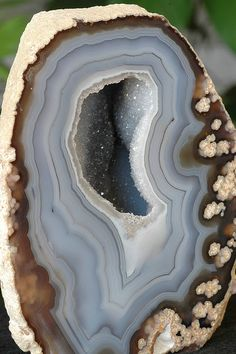 Blue Lace Agate Geode From Rio Grande, Brazil Cool Rocks, Beautiful Rocks, Minerals And Gemstones, Rocks And Minerals, Agate Geode, Blue Lace Agate, Blue Geode, Mineral Stone, Rocks And Gems