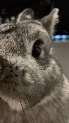 Cute Little Animals, Cute Funny Animals, Cute Dogs, Cute Baby Bunnies, Funny Bunnies, Happy Animals, Animals And Pets, Netherland Dwarf Bunny, Cutest Animals On Earth