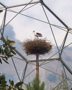 at The Eden Project