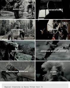 harry potter + magical creatures