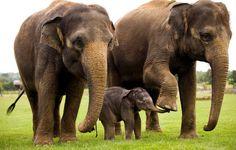 10 new ANIMALS on the edge of EXTINCTION! - #animals #extinction #elephants