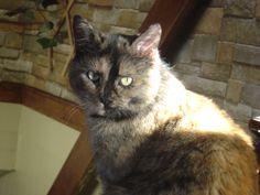 Lili bain de soleil