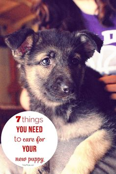7 Things You Need to Care for Your New Puppy | TidyMom.net