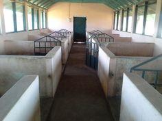 Hog Pig, Pig Breeds, Farm Plans, Pig Pen, Farm Business, Homestead Farm, Gado, House Names, Pig Farming