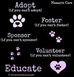 Helping animal options via Namaste Cafe at www.Facebook.com/NamasteDharmaCafe