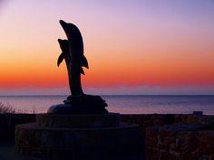Dolphins - Galveston, Texas