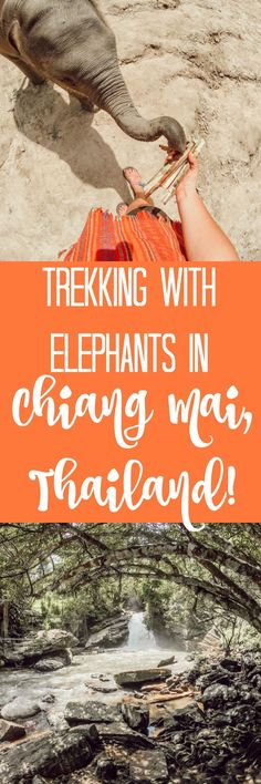 Things to do in Chiang Mai, Elephants Bucket List Destinations, Travel Destinations, Travel Guides, Travel Tips, Restaurant Guide, Chiang Mai, Asia Travel, Luxury Travel, Great Photos