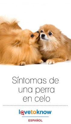 Delantal de Chef propietario de perro I Love My Pug eslogan amante del animal doméstico Lindo Raza
