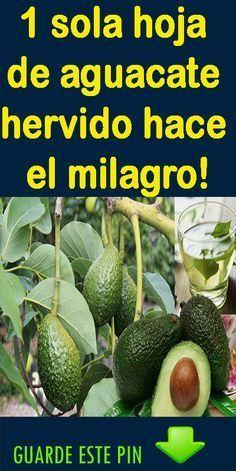 haz milagro, con tan solo una hoja de aguacate. Healthy Juices, Healthy Tips, Avocado Leaves, Medicinal Plants, Natural Medicine, Alter, Tan Solo, Diabetes, Natural Remedies