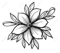 Flower Drawing Discover Beautiful graphic drawing Lily branch with leaves and buds of. Drawing Lily Branch With Leaves And Buds. Beautiful Pencil Drawings, Pencil Drawings Of Flowers, Flower Art Drawing, Flower Sketches, Pencil Art Drawings, Tattoo Drawings, Branch Drawing, Diy Tattoo, Wolf Tattoos