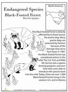 Worksheets Endangered Animals Worksheets Grade 2 colors the ojays and coloring pages on pinterest earth day fourth grade life science comprehension worksheets endangered species black footed ferret