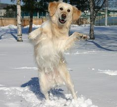 8 Dogs Dancing Ideas Dogs Cute Animals Animals