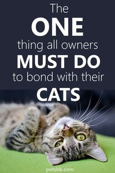 Animals Discover cat facts The One Thing All Owners Must Do to Bond - cat Cat Diet Cat Body Cat Info Kitten Care Cat Behavior All Family Cat Facts Cat Health Crazy Cats Cat Care Tips, Pet Care, Pet Tips, Names Girl, Leo, Cat Info, Cat Hacks, Kitten Heels, Kitten Care