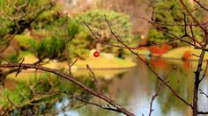 The last berry, Missouri Botanical Garden Kibibi Photography Missouri Botanical Garden, Botanical Gardens, All Pictures, Berry, Landscapes, Photography, Paisajes, Scenery, Photograph