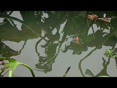 Modal 5000 rupiah bisa dapat banyak ikan || micro fishing tanago - YouTube Fishing Videos, Plant Leaves, Youtube, Plants, Painting, Art, Art Background, Painting Art, Kunst