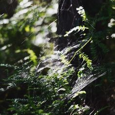 gossamer. #newzealand#bushlife#aotearoa#discoverearth#quiet#websights#nature#wanderlust#farawaynz