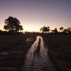 Photo @pedromcbride // Flooded road to nowhere in the Okavanga Delta #Botswana Africa --- home of lions. Happy #worldlionday #moon #wilderness #lost #dawn #petemcbride @thephotosociety by natgeo