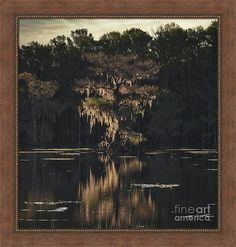 Cypress Swamp, Old Master, Postmodernism, Dorm Decorations, American Artists, Folklore, Art Forms, Art For Sale, Buy Art