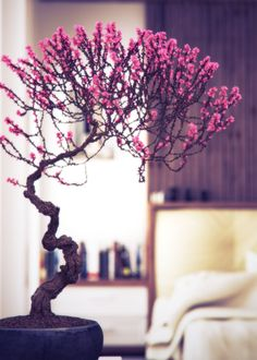 Pink bonsai tree, i just love this one!