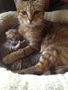 Mother with her babies...