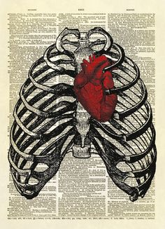 Two antique medical illustrations combined to create one amazing image. A human thorax surrounds a red human heart.  Fabulous! $12.00  YOU WILL RECEIVE A PRINT ONLY. NO FRAME OR MAT IS INCLUDED.  This listing is for an amazing image printed on an upcycled vintage dictionary page. We rescue old dicti...