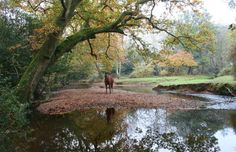 The New Forest.  Hampshire