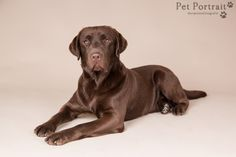 Hondenfotografie Hillegom - Foto van de fotoshoot voor labradors Eadin, Zinzi en Ixe