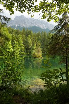 Glacial green in the woods, Badersee / Germany (by...