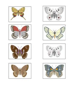 PRINTED GAMES -  Emma's Place Bug Activities, Memory Games, Puzzles, Bugs, Memories, Printed, Papillons, Memoirs, Souvenirs