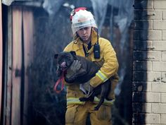 All cats and 30 dogs in pet boarding house die in Australia bush fire that ruined dozens of homes - Australasia - World - The Independent